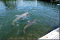 Grassy Key - Dolphin Research Center